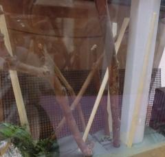 キアゲハ幼虫飼育ケース