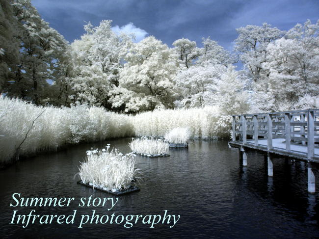 赤外線写真:洗足池公園