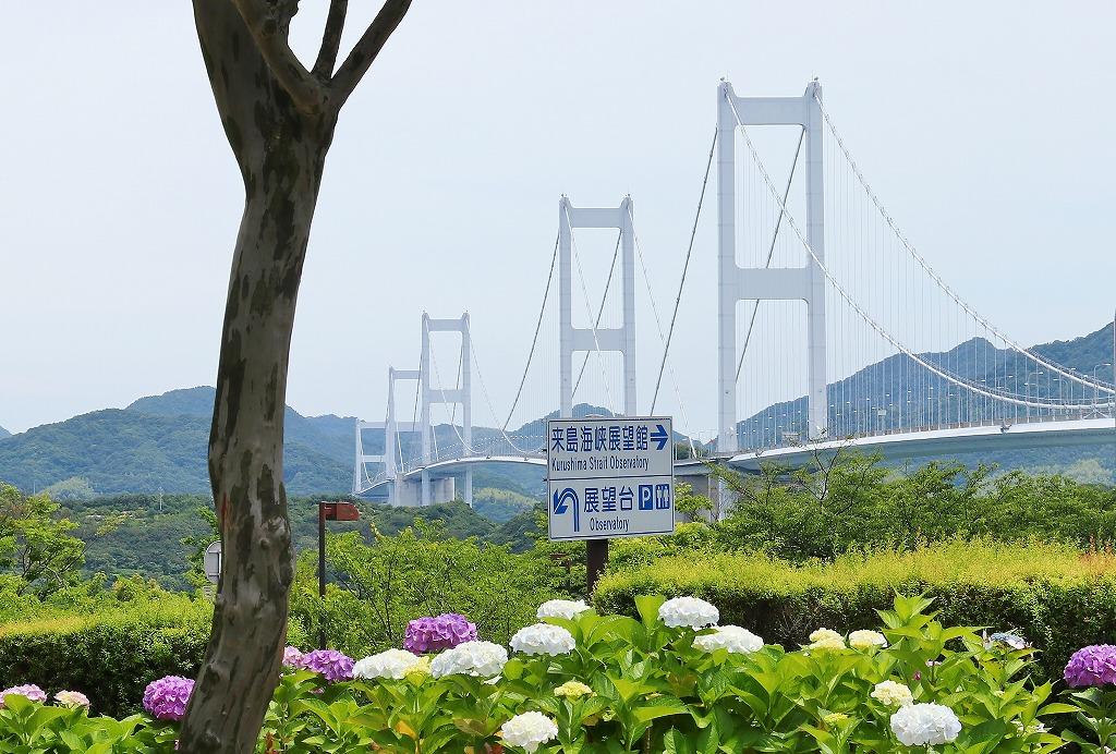 来島海峡大橋と紫陽花2