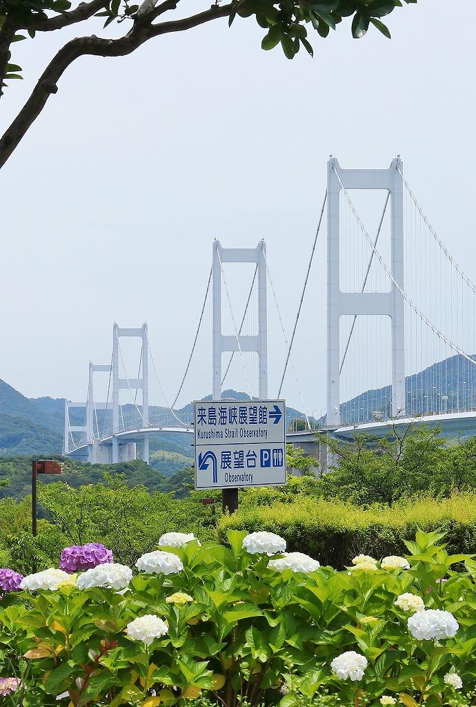 来島海峡大橋と紫陽花1