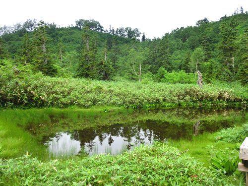 栂池自然園 (38)