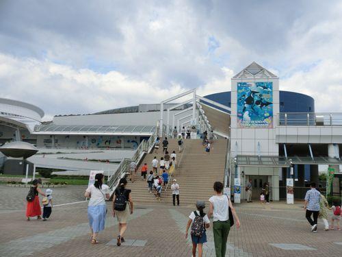 20190825名古屋水族館 (1)