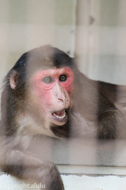 とべ動物園 サル