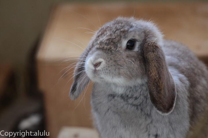 旭山動物園 ウサギ