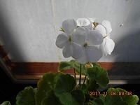 DSCN0449-c.png