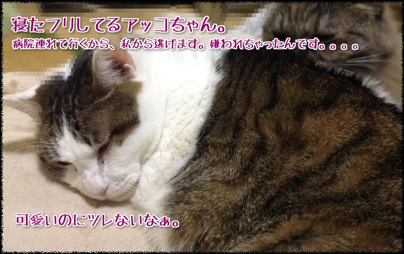 寝たフリアッコちゃん