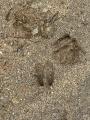 00926_鹿の足跡