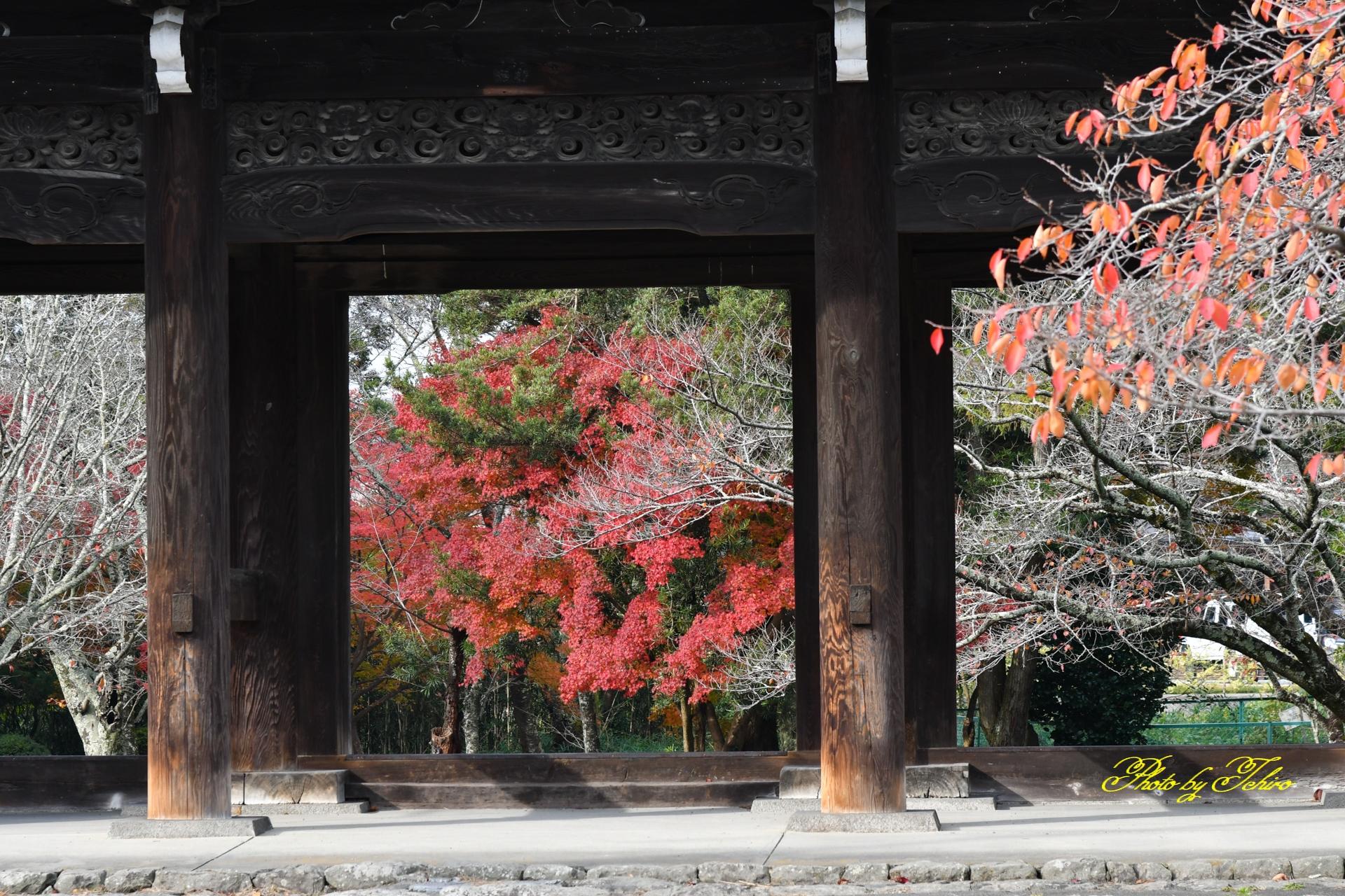 山門と紅葉Ⅱ
