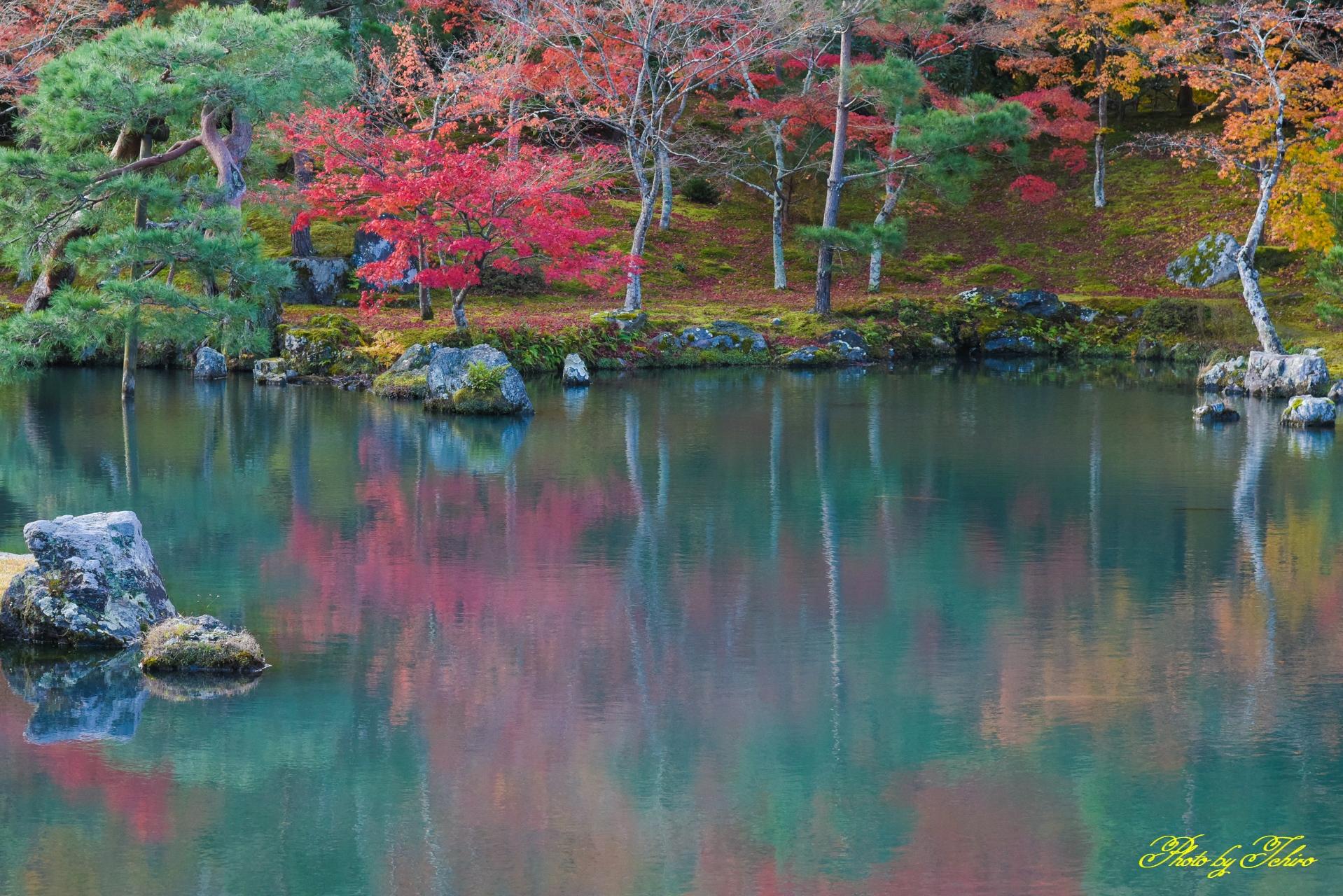 天龍寺曹源池庭園の紅葉