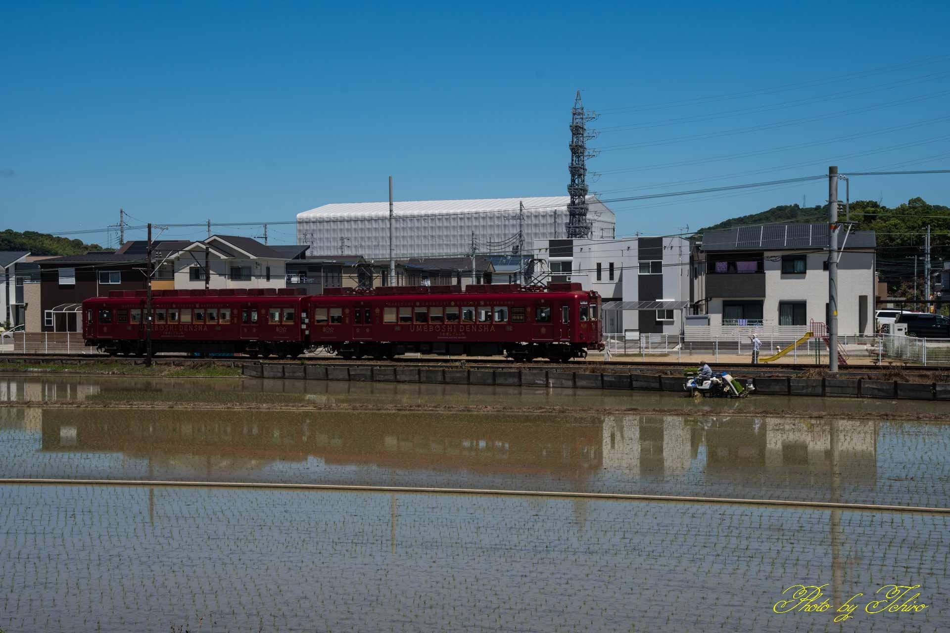 うめ☆電車