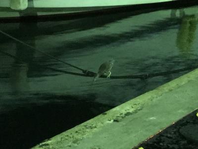 魚と取るのが下手な鳥