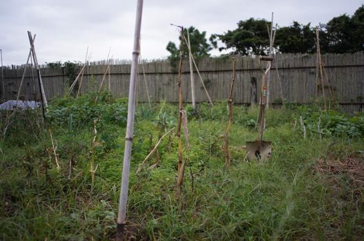 房総フィールド ブロッコリーと芽キャベツの畑開墾 準備