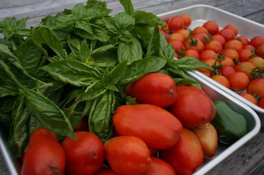 本日の収穫 トマトとバジル
