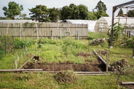 芽キャベツとブロッコリーの畑 耕起