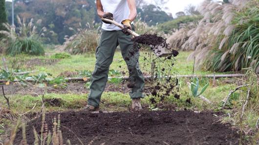 雑草堆肥を畑にまく