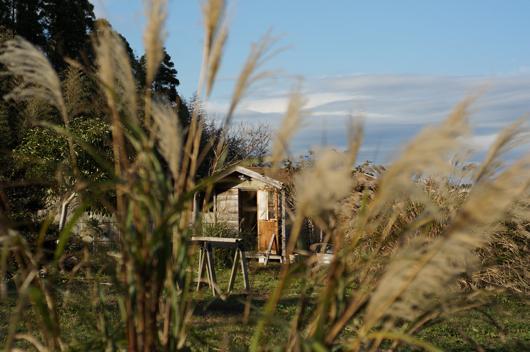 房総フィールドのススキと小屋