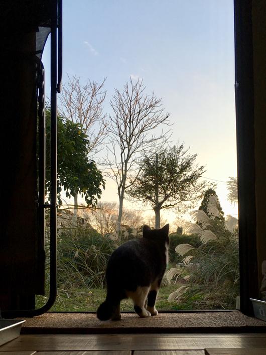 野良猫と夕陽を眺める