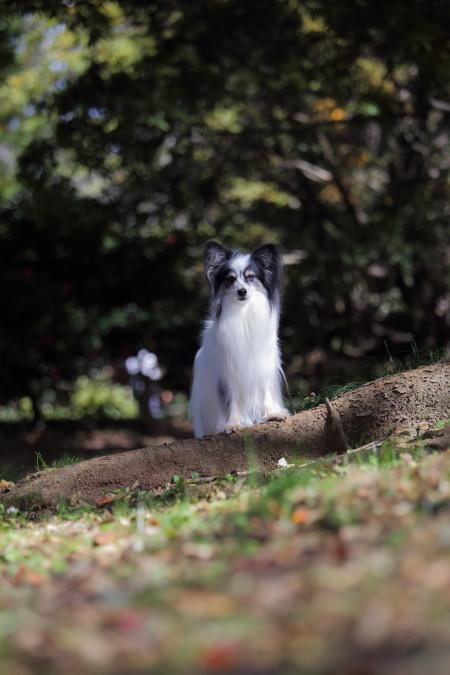 秋色イチロー2017 昭和記念公園