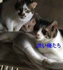 S__8184012.jpg