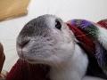 ラパン 毛布探検3