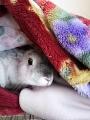 ラパン 毛布探検1