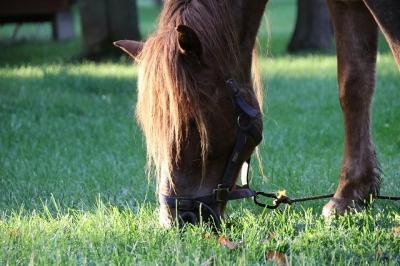 メジェールファームの馬