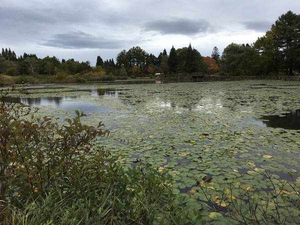 2017-10-19 いもり池