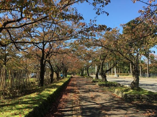 2017-10-26 高田公園