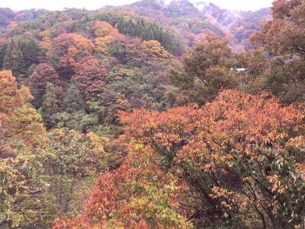 2017-11-04 正善寺ダム周辺の紅葉