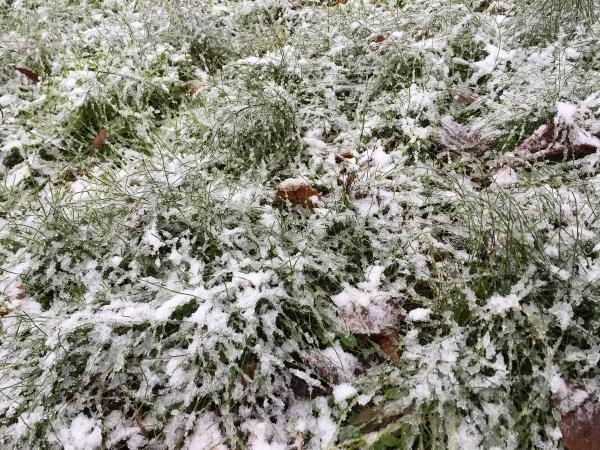 2017-11-16 初雪
