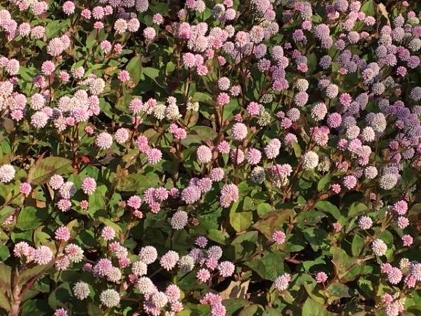 1105小さな花