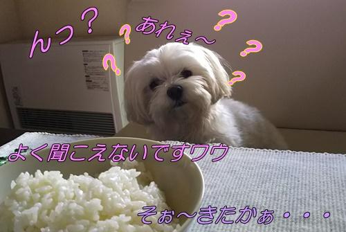 DSC_2234.jpg