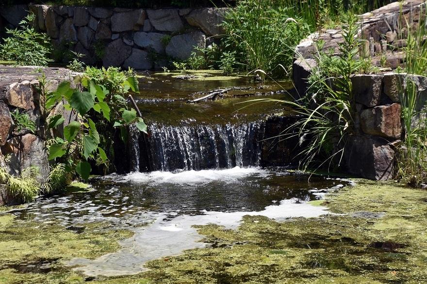 春の泉 (4)