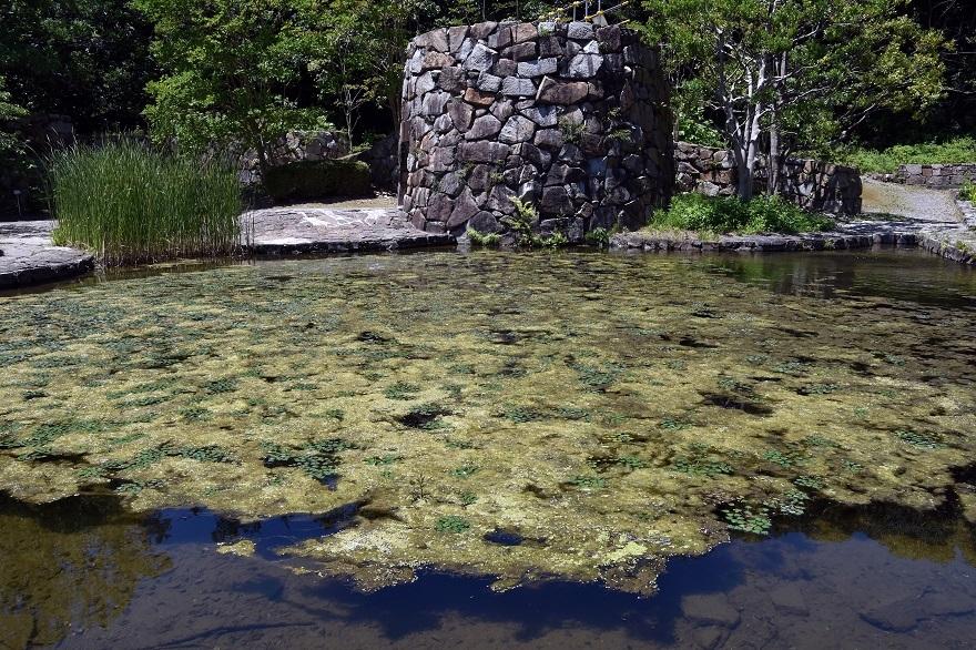 春の泉 (3)