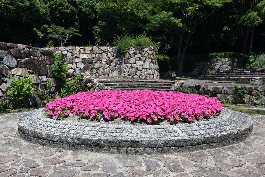 春の泉 (6)