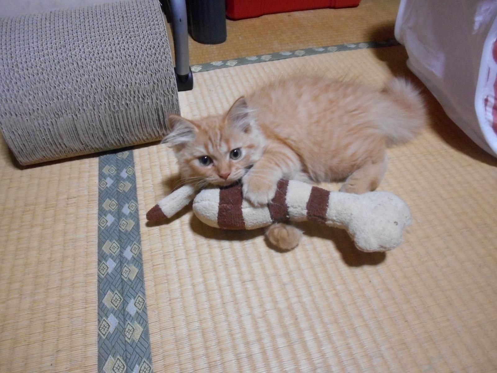 猫キック (10)