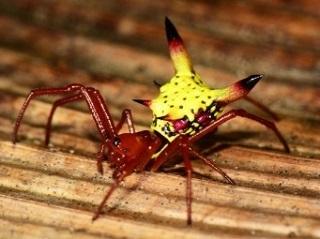 クモのお尻がピカチュウ