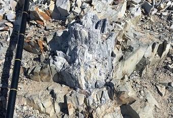 古代の木の化石