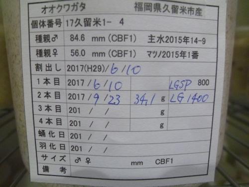 06P1040554.jpg