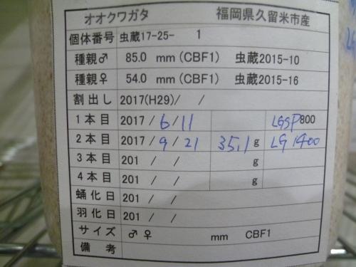 P1040532.jpg