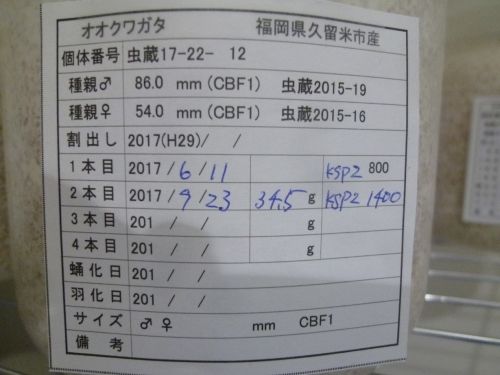 P1040542.jpg