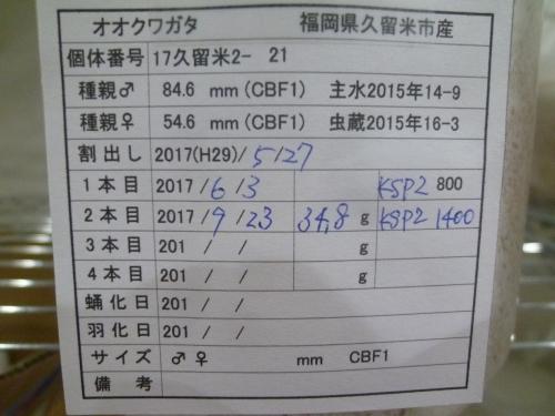 P1040556.jpg
