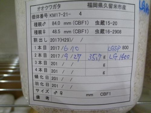 P1040569.jpg