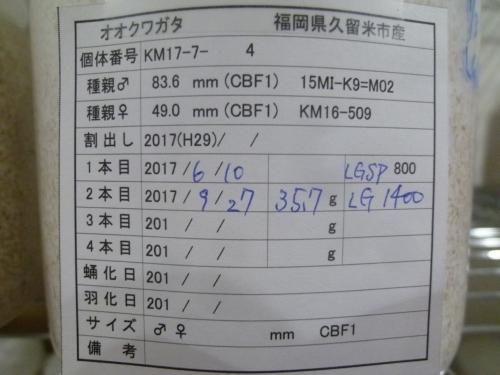 P1040573.jpg