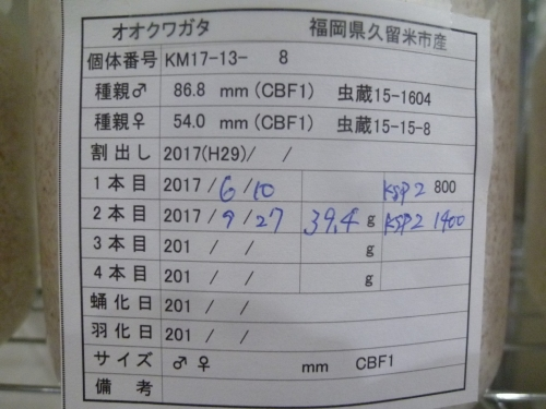 P1040577.jpg