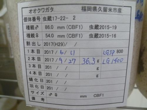 P1040582.jpg
