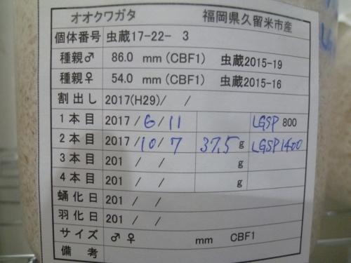 P1040600.jpg