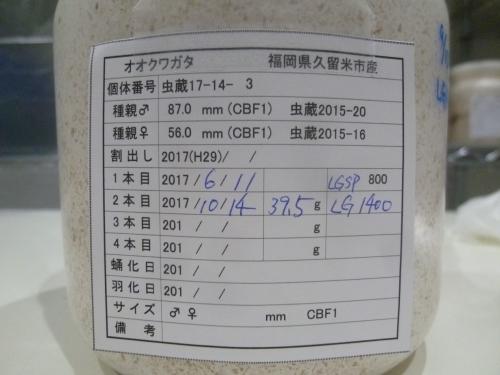 P1040602.jpg