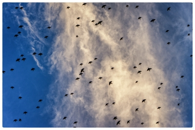 the-birds-20171112