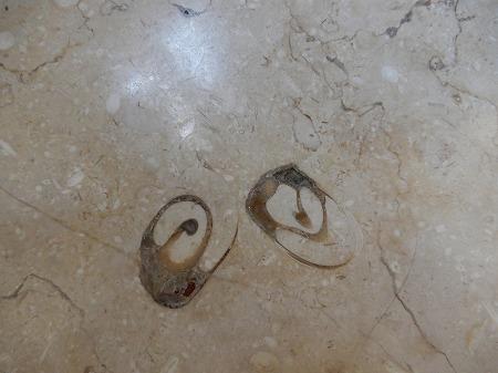 化石その7